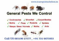 I Care Pest Solution